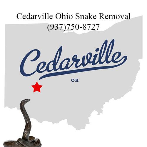 cedarville ohio snake removal