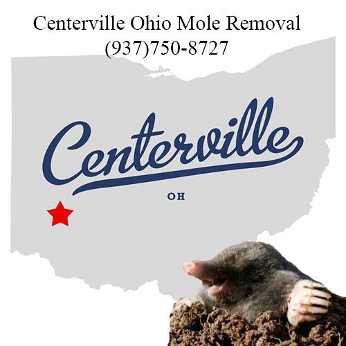 centerville ohio mole removal