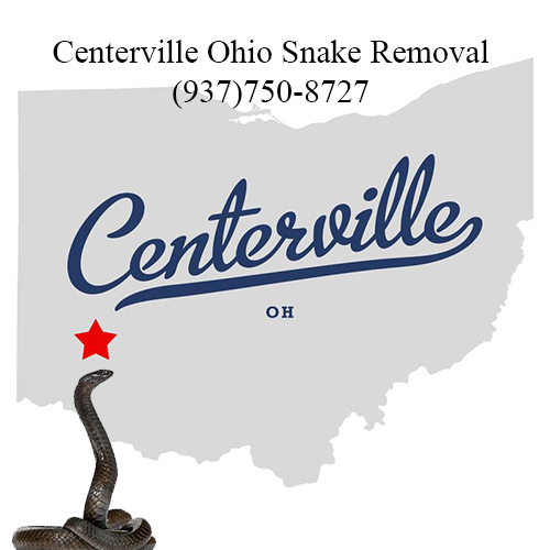 centerville ohio snake removal