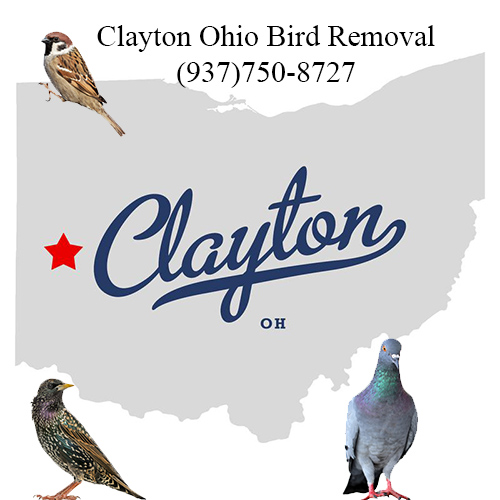 clayton ohio bird removal