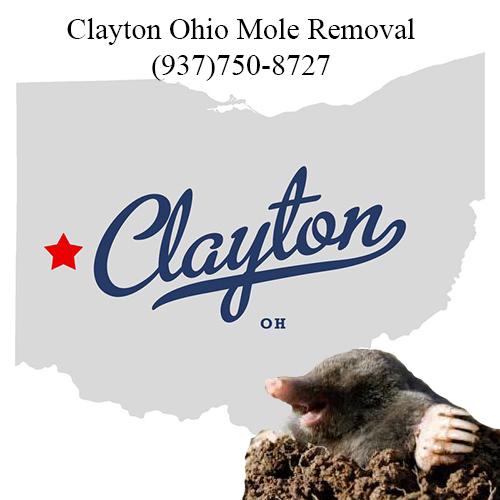 clayton ohio mole removal