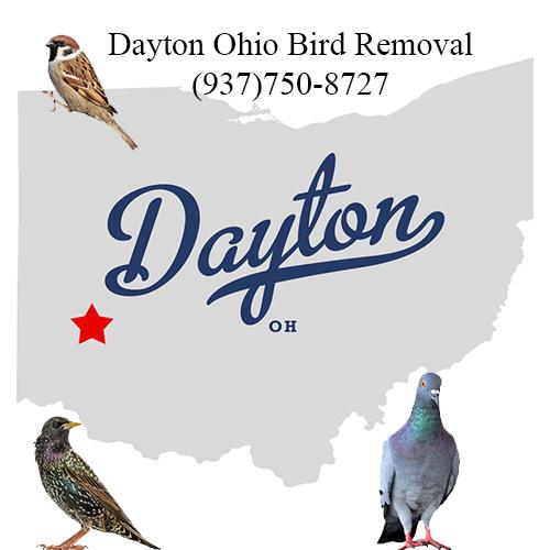 dayton ohio bird removal