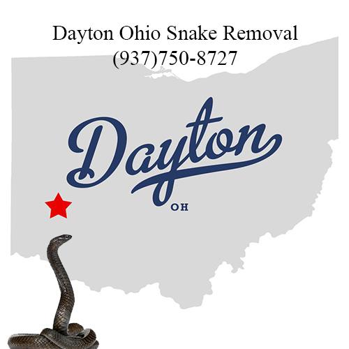 dayton ohio snake removal