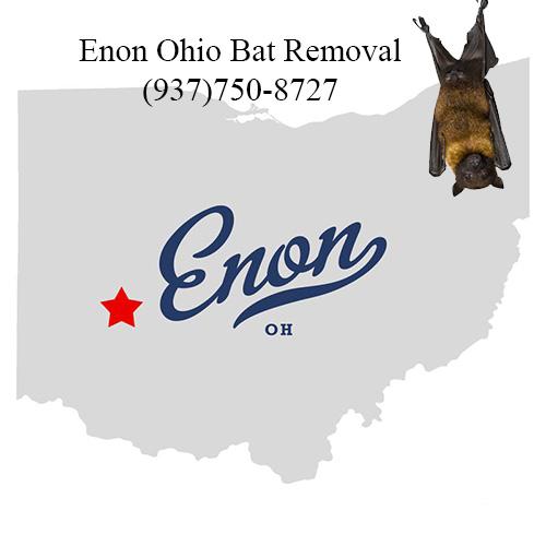 enon ohio bat removal