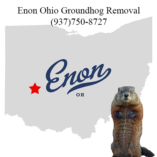 enon ohio groundhog removal