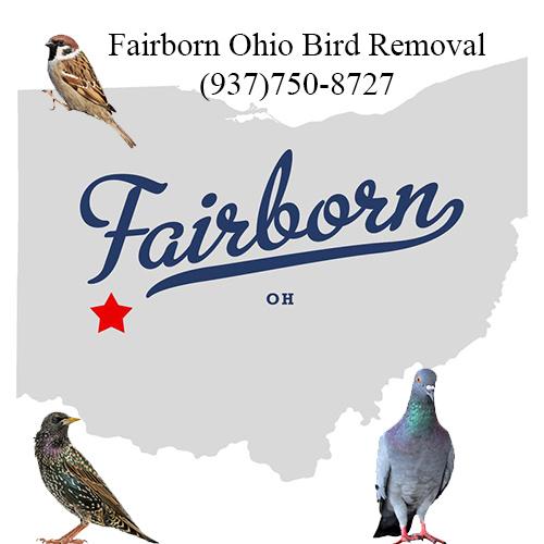 fairborn ohio bird removal