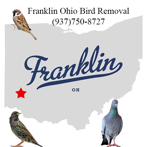 franklin ohio bird removal