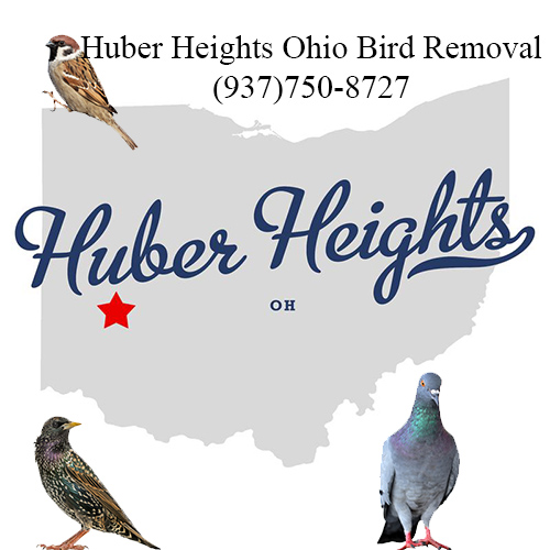 huber heights ohio bird removal