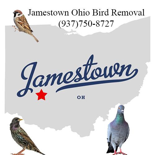 jamestown ohio bird removal