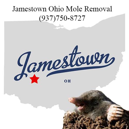 jamestown ohio mole removal