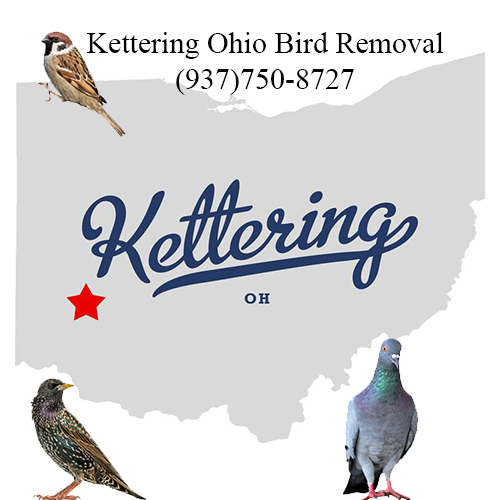 kettering ohio bird removal