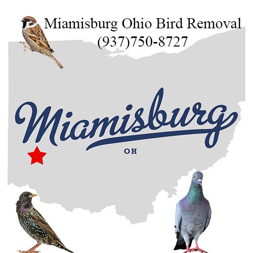 miamisburg ohio bird removal