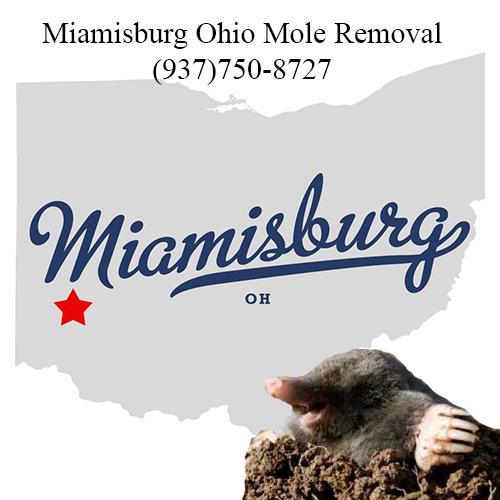 miamisburg ohio mole removal