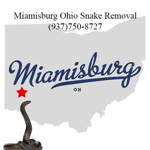 miamisburg ohio snake removal