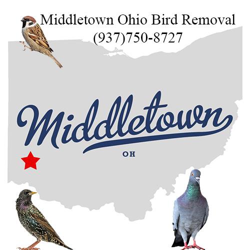 middletown ohio bird removal