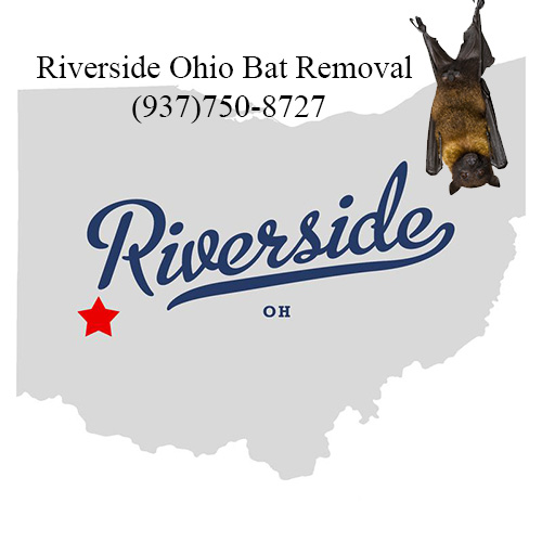 riverside ohio bat removal