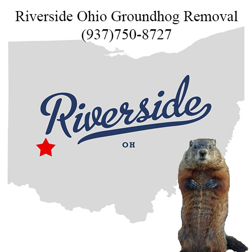 riverside ohio groundhog removal