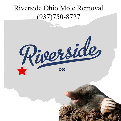 riverside ohio mole removal
