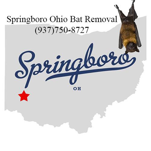 springboro ohio bat removal