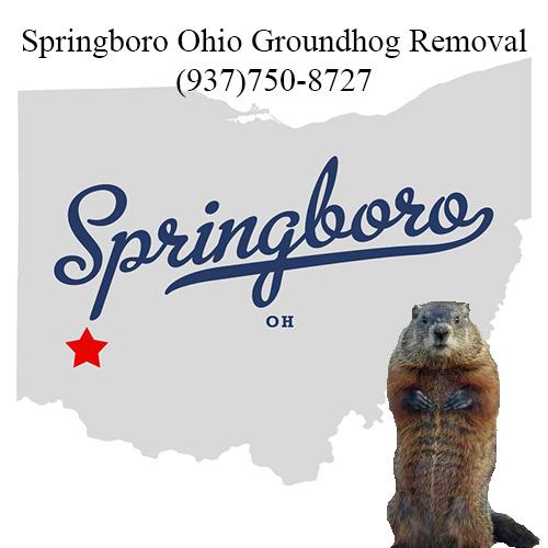 springboro ohio groundhog removal