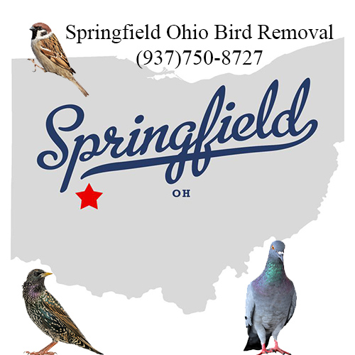 springfield ohio bird removal