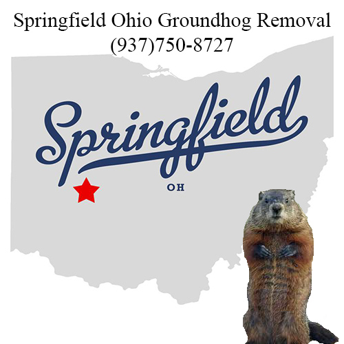springfield ohio groundhog removal