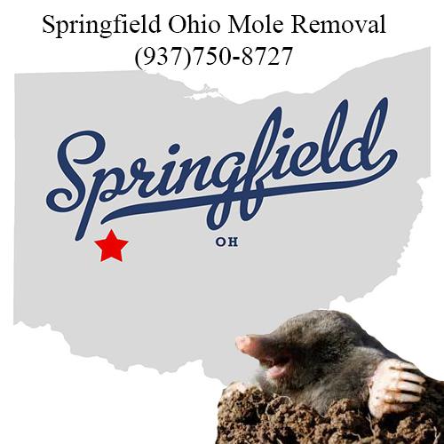 springfield ohio mole removal