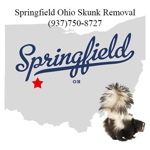 springfield ohio skunk removal