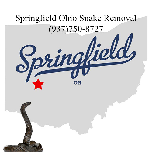 springfield ohio snake removal