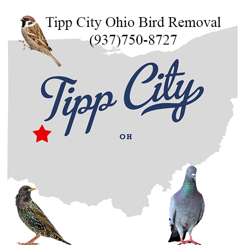 tipp city ohio bird removal