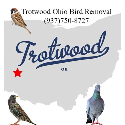 trotwood ohio bird removal