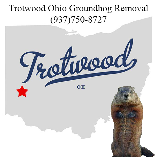 trotwood ohio groundhog removal