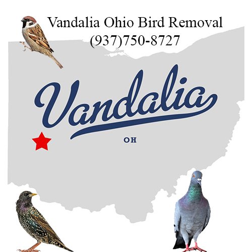vandalia ohio bird removal