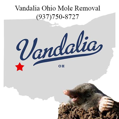 vandalia ohio mole removal