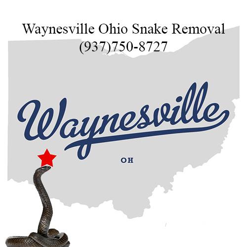 waynesville ohio snake removal