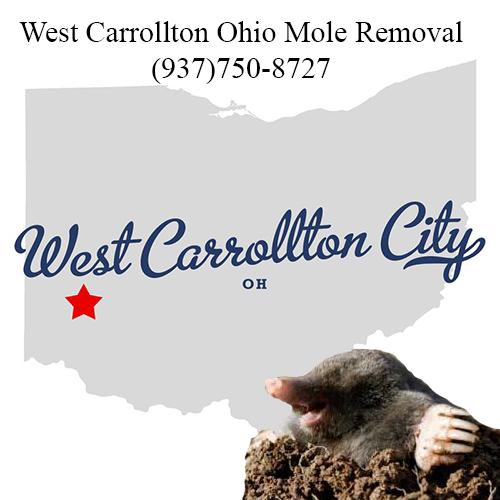 west carrollton ohio mole removal