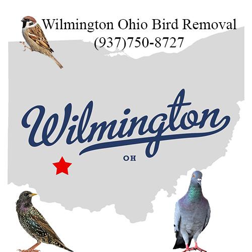 wilmington ohio bird removal