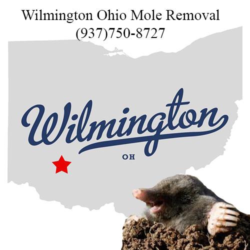 wilmington ohio mole removal