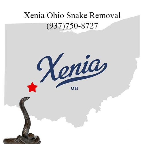 xenia ohio snake removal