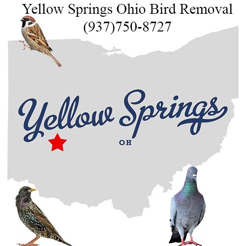 yellow springs ohio bird removal