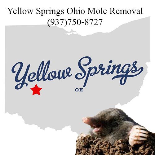 yellow springs ohio mole removal