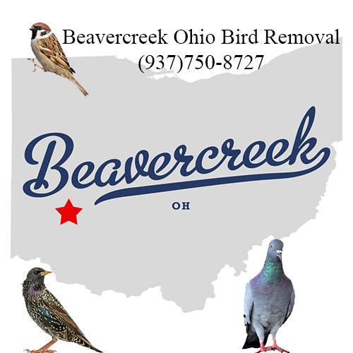 beavercreek ohio bird removal