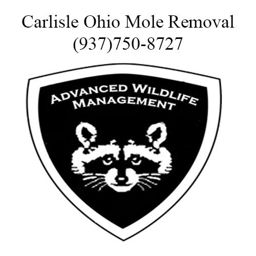carlisle ohio mole removal