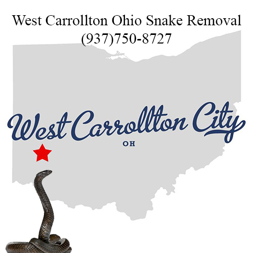 west carrollton ohio snake removal