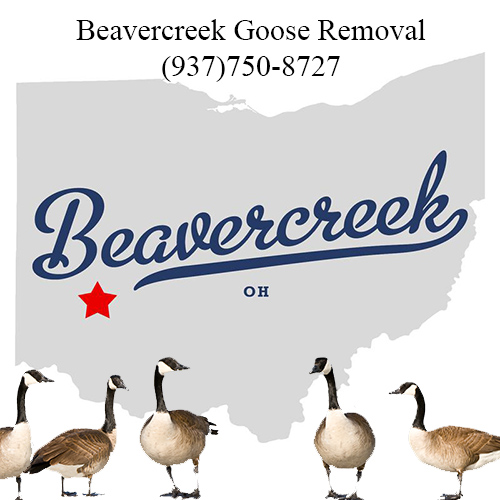 beavercreek ohio goose removal (937)750-8727