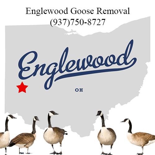 englewood ohio goose removal (937)750-8727
