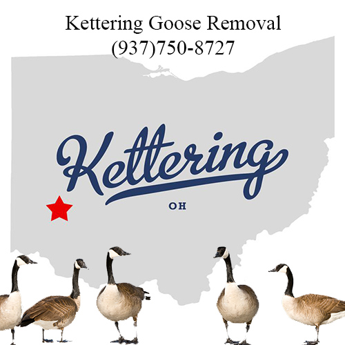 kettering ohio goose removal (937)750-8727