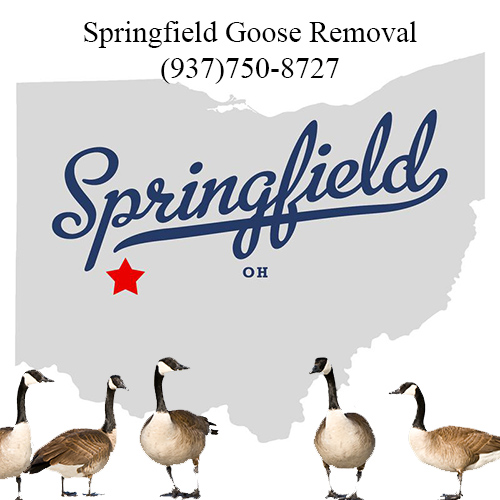 springfield ohio goose removal (937)752-8727