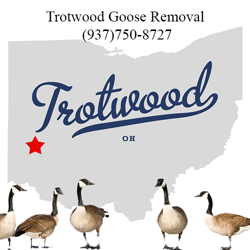 trotwood ohio goose removal (937)750-8727
