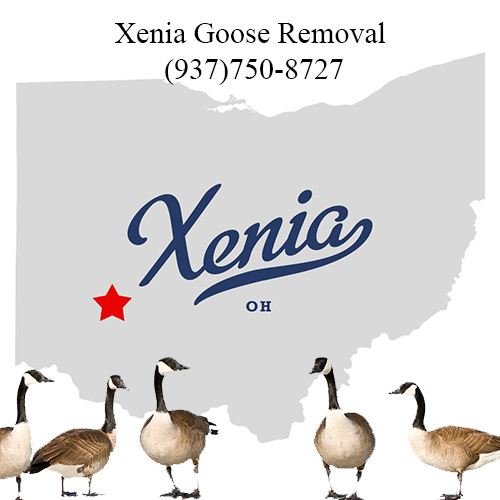 xenia ohio goose removal (937)750-8727